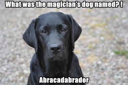 What was the magician's dog named? !