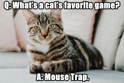 Q: What's a cat's favorite game?