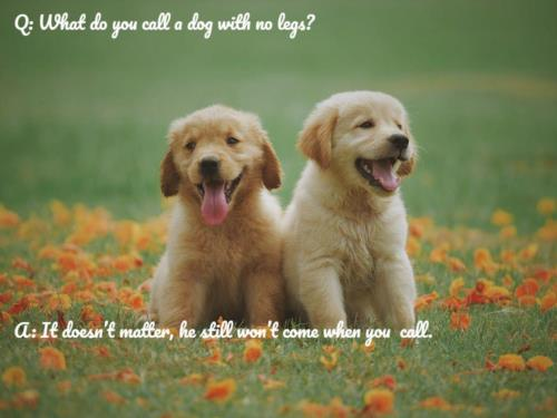 dog jokes of the day