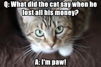 Q: What did the cat say when he lost all his money?