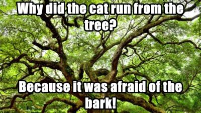 Why did the cat run from the tree?