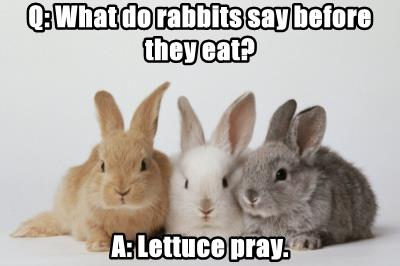 Q: What do rabbits say before they eat?