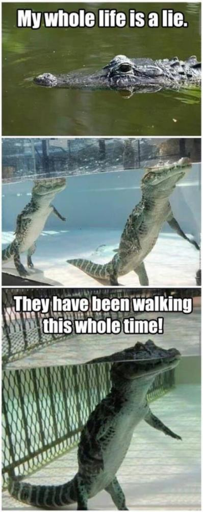My whole life has been a lie, alligators walk unde