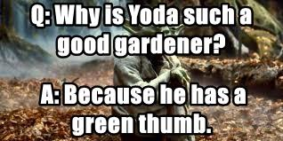Q: Why is Yoda such a good gardener?
