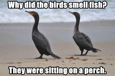 Why did the birds smell fish?
