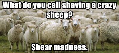 What do you call shaving a crazy sheep?