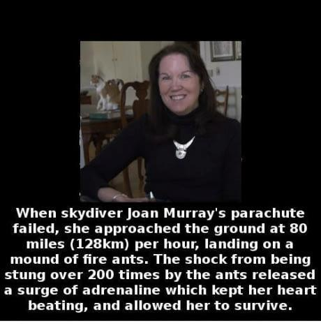 Sky Diver Joan Murray#39;s amazing escape after he
