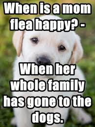 When is a mom flea happy? -
