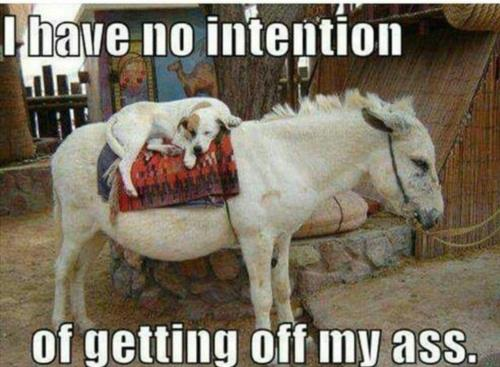 I HAVE NO INTENTION OF GETTING OFF MY ASS.....