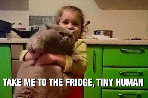 take me to the fridge .....