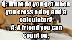 Q: What do you get when you cross a dog and a calculator?