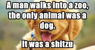 A man walks into a zoo, the only animal was a dog.