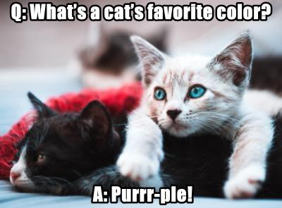 Q: What's a cat's favorite color?