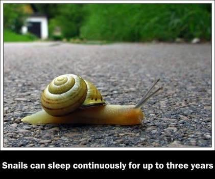 Snail can sleep continuously for upto 3years