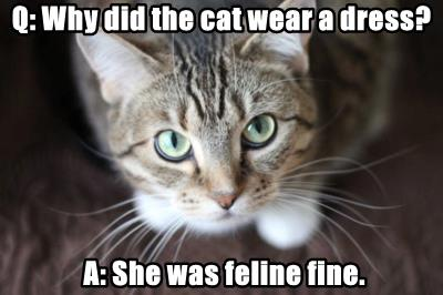 Q: Why did the cat wear a dress?