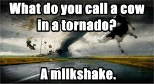 What do you call a cow in a tornado?