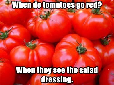 When do tomatoes go red?