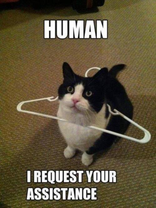 human i require your assistance