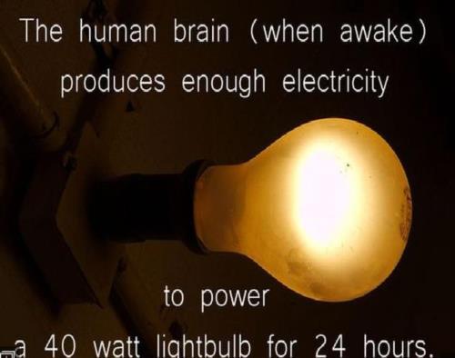 The human brain(when awake) produces enough electr