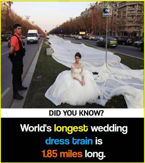 Longest  wedding  dress 👗