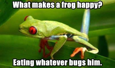 What makes a frog happy?