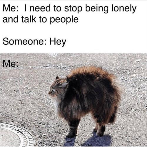 Anyone else 🤣😹