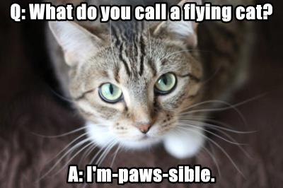 Q: What do you call a flying cat?