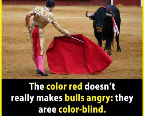 Color  blind   omg 🤣