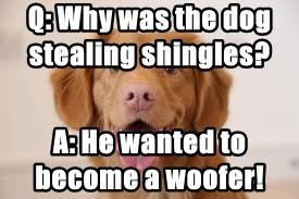 Q: Why was the dog stealing shingles?