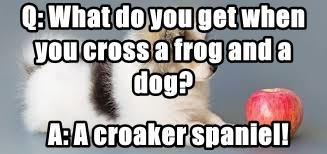 Q: What do you get when you cross a frog and a dog?