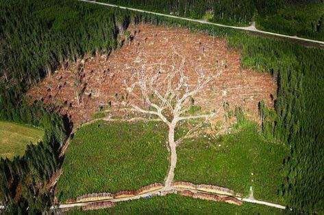 Ironic photo deforestation