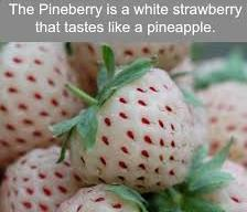 The Pineberry