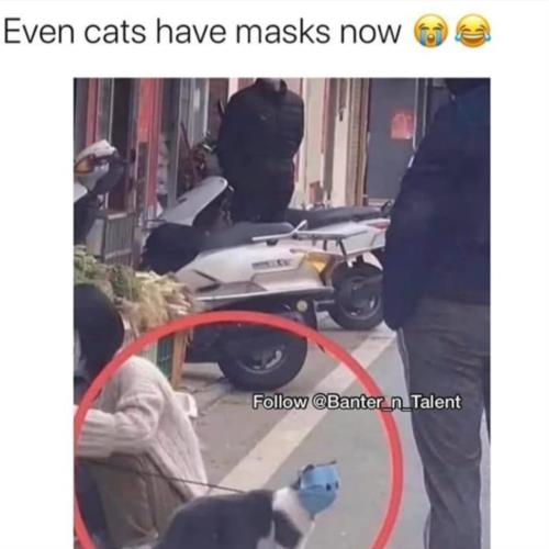 Even cat has a mask nowadays 😓