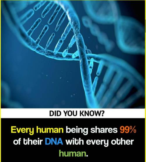 99% of DNA  with  another  human