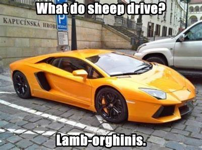 What do sheep drive?