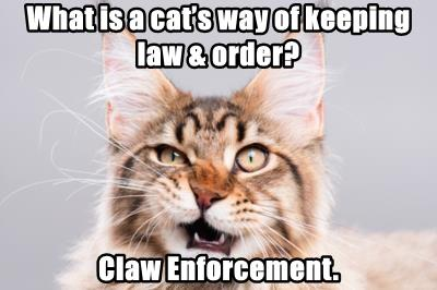 What is a cat's way of keeping law & order?