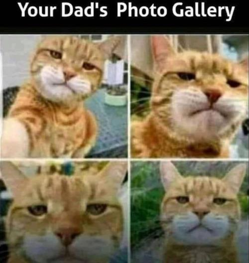 dad's photos