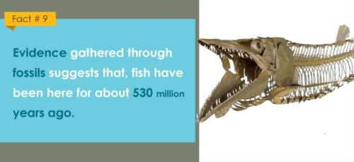 fact about fishes