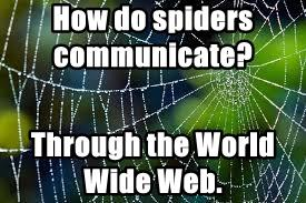 How do spiders communicate?