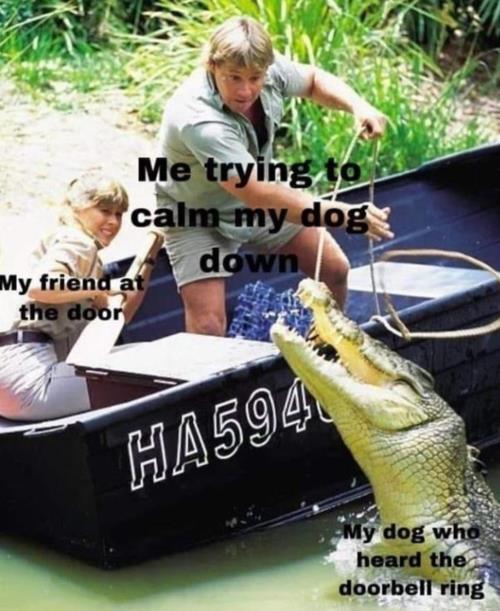 calming my dog
