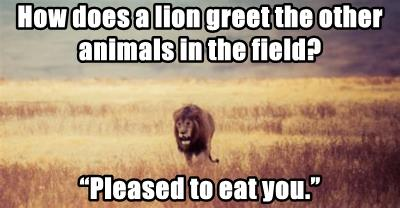 How does a lion greet the other animals in the field?