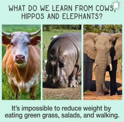 What do we learn from cows, hippos and elephants