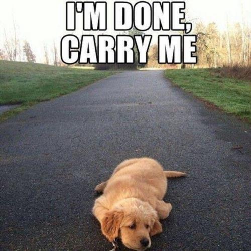 im done... carry me...