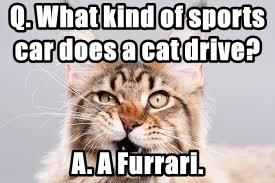 Q. What kind of sports car does a cat drive?