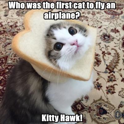 Who was the first cat to fly an airplane?