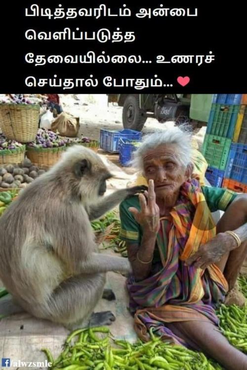 Hearbreaking pic of monkey consoling grandma