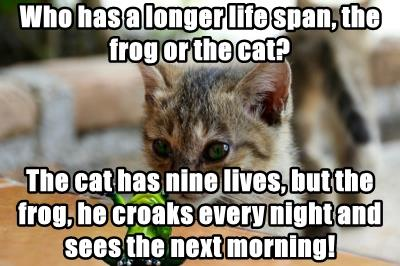 Who has a longer life span, the frog or the cat?