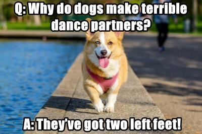 Q Dog Dance Q: Why do dogs ...